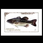 Large Mouth Bass watercolor print