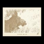 Moose-Wyoming